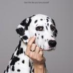 biocanina dalmatian_aotw